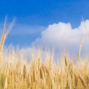 【実践】グルテンフリー始めます!~小麦断ちの生活~②