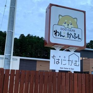 陸前高田市高田町の市街地に愛犬家が喜ぶホットスポット、ドッグラン付きの「わんかふぇ」がオープン