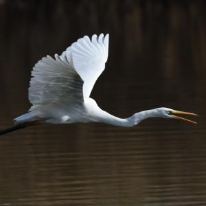 バードウォッチング・・・(アオサギ、ダイサギ、モズ、カシラダカなど) ☆BWというより、近所の池で野鳥撮影の練習かな?