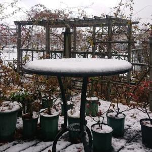 今季初の積雪?・・・ ☆ほんのちょっとだけど。(笑)