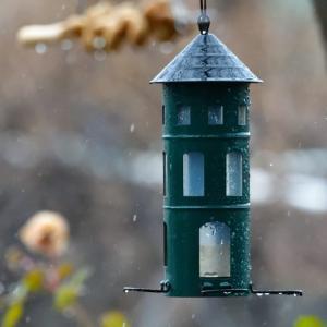 この時期に、霙でもなく、雪でもなく・・・雨 ☆こんなに暖冬?で大丈夫かな?