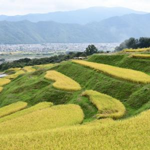 稲刈りが始まった姨捨の棚田・・・ ☆実りの秋、深まりゆく秋を感じて