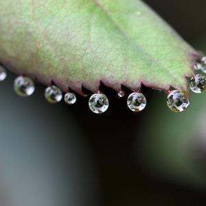 小さな小さな水滴の世界・・・ ☆鬱陶しい梅雨ではあるけれど。