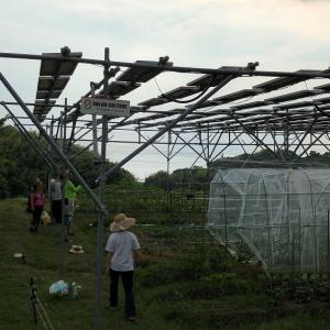 ソーラーシェアリングはアリか!?淡路島ソーラーシェアリング協会会長との談話から得たヒントとは!?