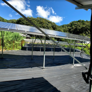 防草シートだけでは安心できない太陽光発電所の雑草対策