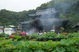 久し振りに所長散策ぶらり~雨の京都に似合うスポット「三室戸 あじさい寺」