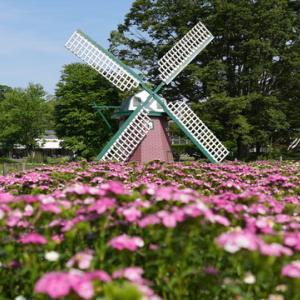 所長休日散策ぶらり~「兵庫県立フラワーセンター」お花いっぱい「鯉鯉(コイコイ)まつり」開催中
