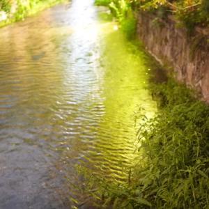 所長夜散策ぶらり~京都祇園白川に「ホタル」が飛んでる~情緒たっぷり~どっちの水が甘いか~(^^♪