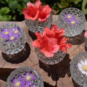 所長休日散策ぶらり~「岩船寺」梅雨時期に咲くアジサイは赤色、青色、白色など鮮やかな色彩