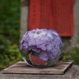 所長休日散策ぶらり~見ごろは今!古都・奈良の般若寺で満開のコスモスにうっとり アジサイと共演~