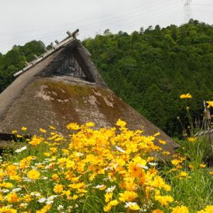 所長休日散策ぶらり~京都府南丹市美山町「かやぶきの里」今「コスモス」や花々が綺麗に咲いています~