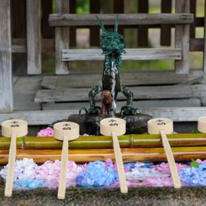 所長休日散策ぶらり~京都伏見「藤森神社」広大な紫陽花苑にさまざまな紫陽花が咲き揃う 勝運と馬の神