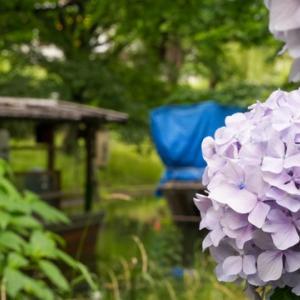 所長休日散策ぶらり~「伏見運河」伏見ならではの酒蔵風景や十石舟をバックに咲くアジサイ。