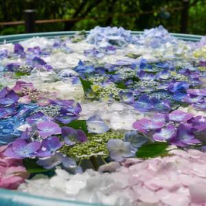 京都府木津川市加茂町の岩船寺 梅雨のアジサイ彩り鮮やか 「花の寺」鮮やか花手水も 所長散策ぶらり