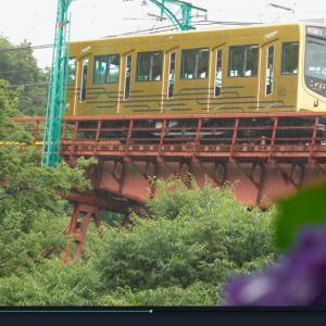 京都府八幡市「神應寺」のあじさい色付く。参道ケーブルと紫陽花を一緒に撮影できる絶好のポイント