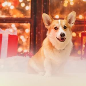 クリスマス撮影会を「 スタジオアモ 」にて開催します♪
