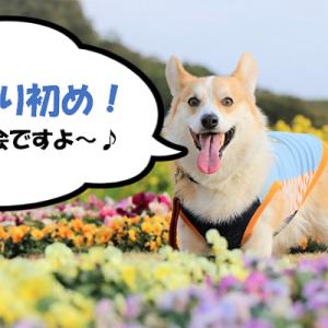 【新年撮り初め♪】屋外撮影会のご案内(千葉市 稲毛海浜公園)