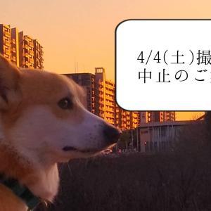 4/4(土)イースター撮影会中止のお知らせ