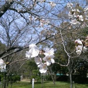 あちこちで春を感じる