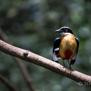 2020年6月:ゲンカチャンで野鳥撮影 週末弾丸バーダーズ