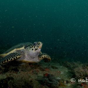2020年6月:タイ人ダイバーに人気のWAYOONでダイビング(サメサン沖)