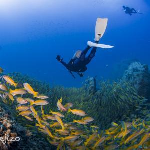 2020年7月の連休:タオ島でのダイビング 楽しかった!