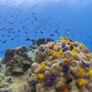 2020年10月のタオ島ダイビング:最終日の午前はライトハウスへ