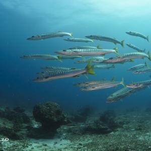 2020年10月:アンダマン海のシーズン開幕ダイビング