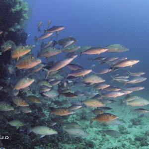 2020年10月:アンダマン海 2日目 スリン島とリチェリュー・ロック