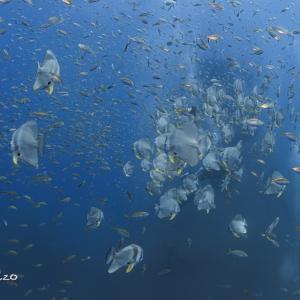 2020年11月 Wayoon Giantで行くチャーン島:みんなで潜った沈没船