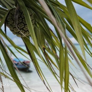 2021年リペ島 ゲストハウスと色々な風景。