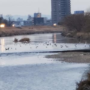 ぶらり四季散歩Ⅸ・矢田川ふれあい橋2021/01