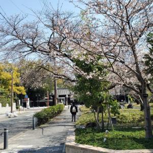 歴史と伝統が描き出す、桜満開弥生の徳川園を訪れる
