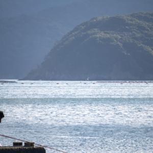 フカセ釣りでボウズを回避‼️釣れるアタリの取り方