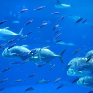 大潮や潮止まりでは釣れない理由はなぜ?🤔魚の生態を解説❗️
