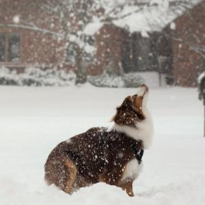 大雪の一日 そのはしゃぎっぷりにプレッツェルが犬だったと再確認する