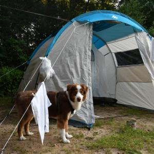 犬を連れて初のキャンプへ!楽しい時間が過ごせました