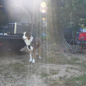 犬を連れて初のキャンプへ!楽しい時間が過ごせました 後編