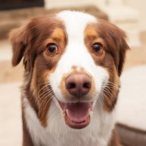2回目の犬連れキャンプへ アメリカの巨大な湖でプレッツェルと遊んで来ます