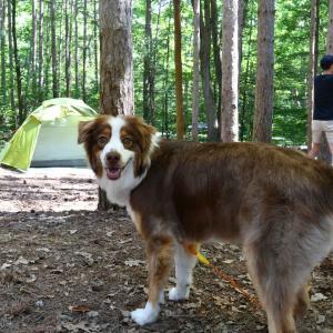 犬を連れて2回目のキャンプへ 犬連れキャンプにおすすめのテントをご紹介