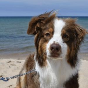 犬を連れてキャンプへ ドッグビーチで水遊びを楽しんできました