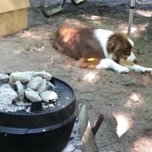 犬を連れてキャンプへ 万能なダッチオーブンの本気を見せつけられました