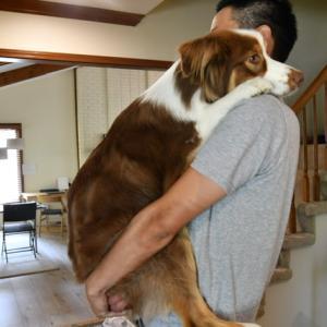 【犬のしつけ】7月の反省と8月の目標【吠えることに改善が見られました】