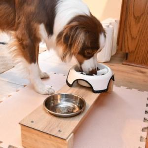 【犬のダイエット】食事制限で脂肪を落とす第一フェーズをスタートします