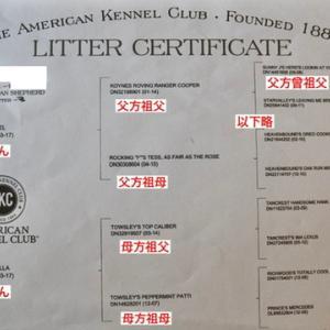 AKC(American Kennel Club)とは?組織の紹介と登録方法