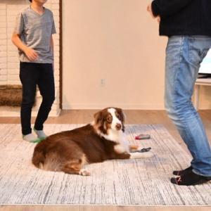 州がエピデミック宣言 不便な生活に逆戻りですが、愛犬は喜んでいます
