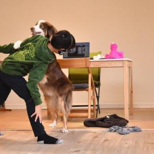 またもや学校が完全オンライン授業に 小学生の息子は大喜びで愛犬と暴れています