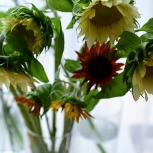 夏の花合わせと色合わせ|花のある生活