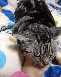 話の分かるマリーたんと味の分かる野良猫ハーくん😃💕