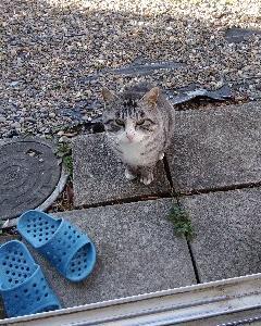 のら猫ハーくん🎵お久しぶり👋😆💕
